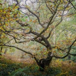 Atmospheric tree in Autumn