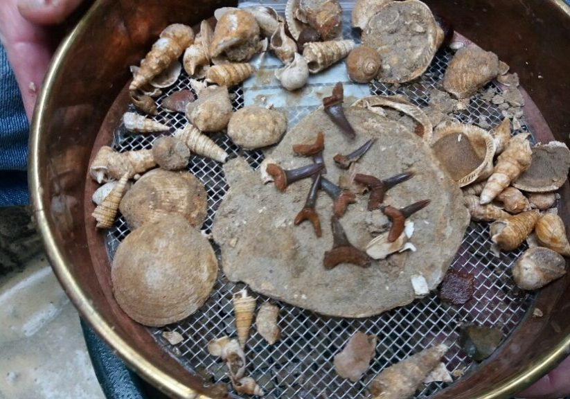 Fossils and other finds in a sieve