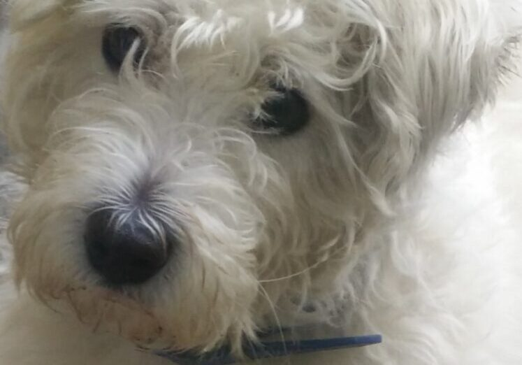 Dave, our dog of the week