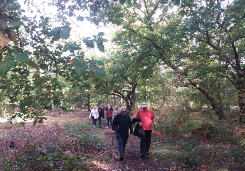 Walking group in the woods